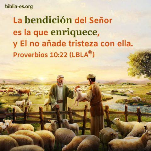 Ovejas,Evangelio de hoy,evangelio del dia,Biblia,Versiculos Biblicos