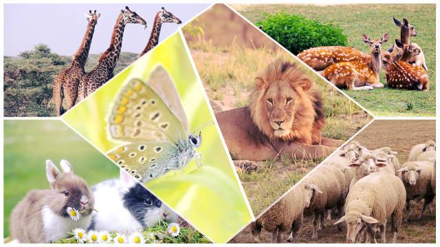 La creacion de Dios,animales,genesis