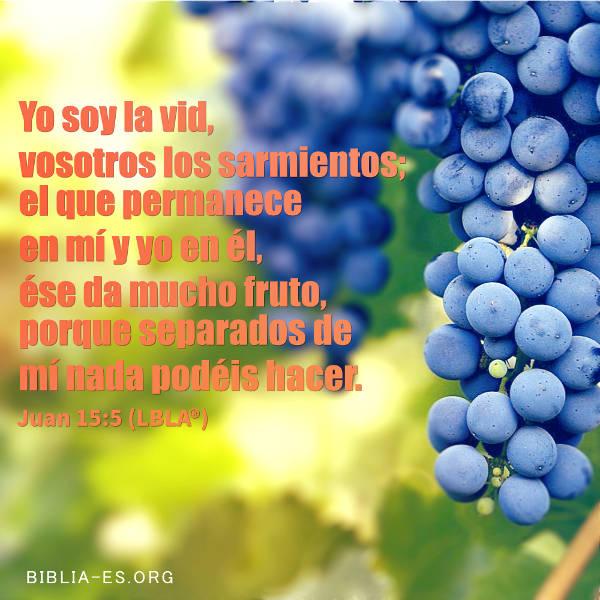 Uva,versiculos de la biblia,imagenes biblicas