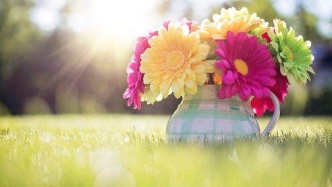 flores, luces