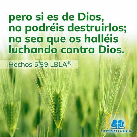 Hechos 5:39